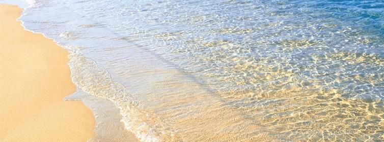 石垣島汽水域ダイビング